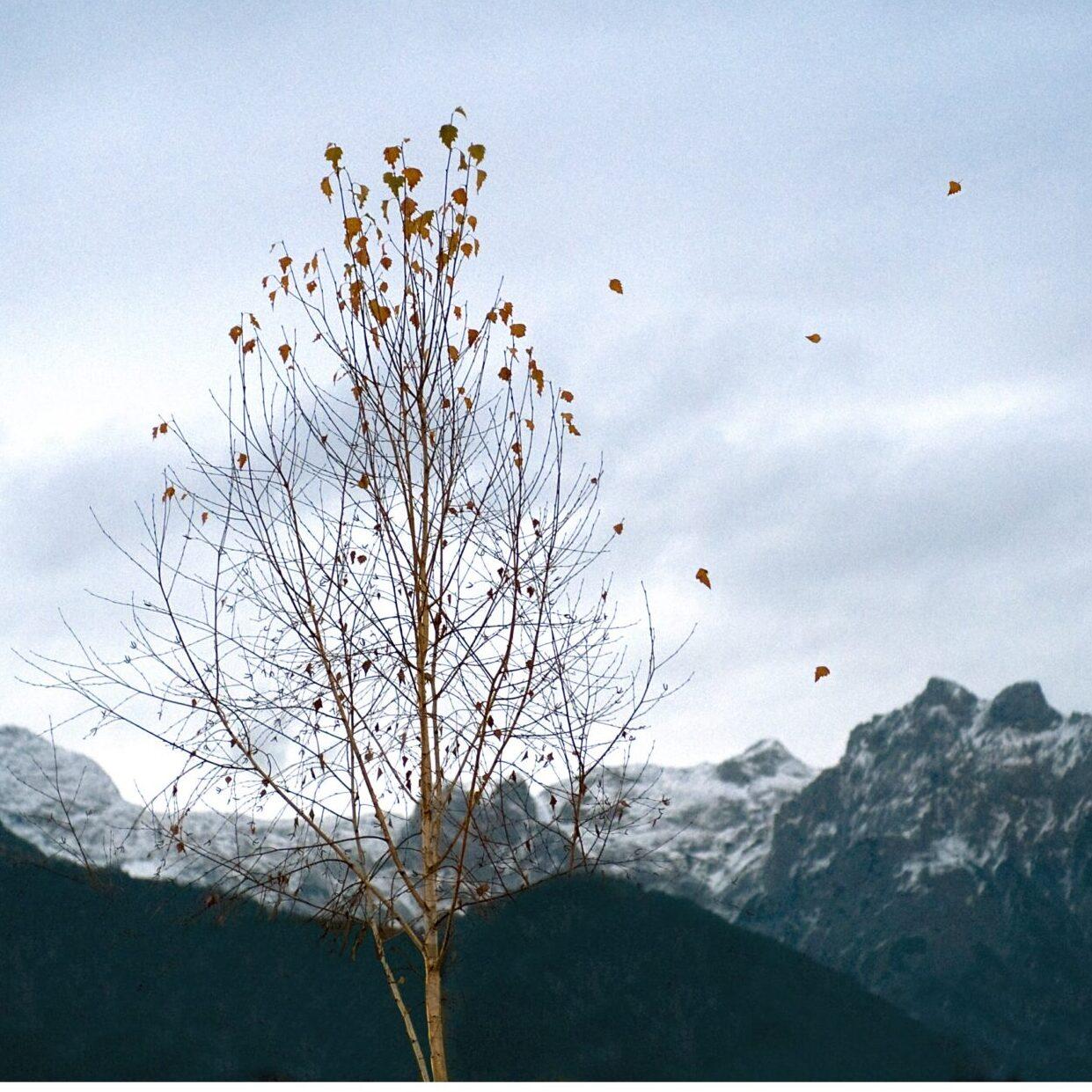 albero e montagne